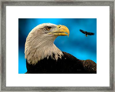 Bald Eagle And Fledgling  Framed Print by Bob Orsillo