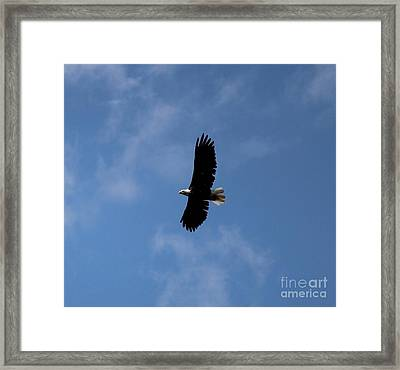Framed Print featuring the photograph Bald Eagle by Ann E Robson