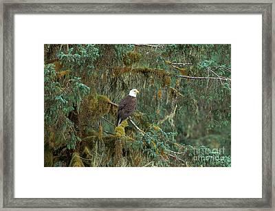 Bald Eagle Framed Print by Art Wolfe
