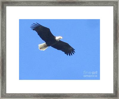 Bald Eagle At Lake Rowena Framed Print by Jeffrey Koss