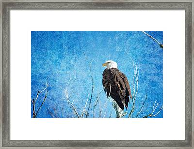Bald Eagle Blues Framed Print by James BO  Insogna
