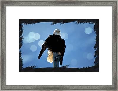 Bald Eagle Dreaming Framed Print by Debra  Miller