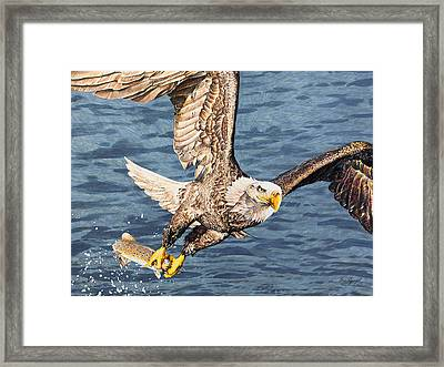 Framed Print featuring the drawing Bald Eagle Fishing  by Aaron Spong