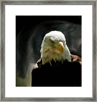 Bald Eagle Giving You That Eye Framed Print
