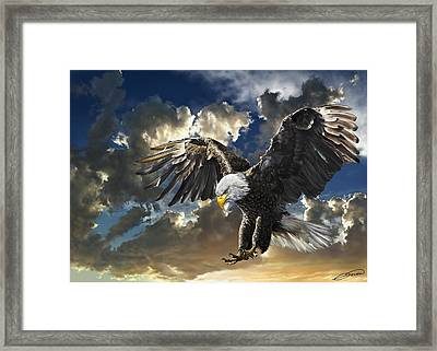 Bald Eagle Haliaeetus Leucocephalus Framed Print by Owen Bell