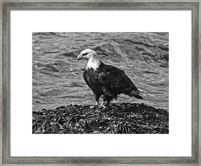 Framed Print featuring the photograph Bald Eagle In Black And White by Timothy Latta