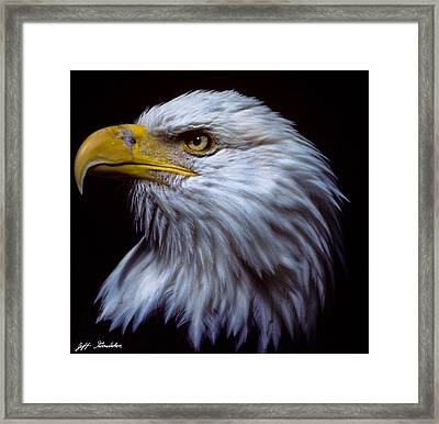Framed Print featuring the photograph Bald Eagle by Jeff Goulden