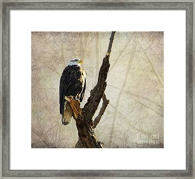Bald Eagle Keeping Watch In Illinois Framed Print