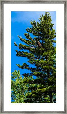 Framed Print featuring the photograph Bald Eagle   by Lars Lentz