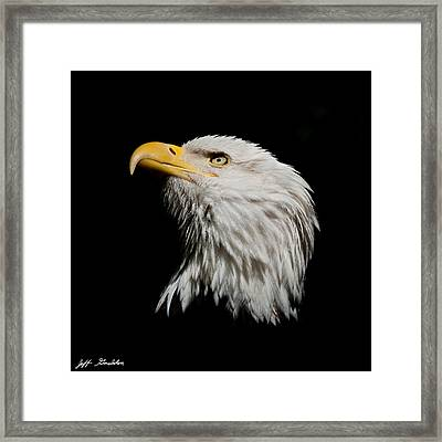 Bald Eagle Looking Skyward Framed Print