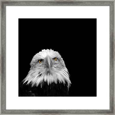 Bald Eagle Framed Print by Mark Rogan