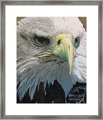 Sold Bald Eagle Framed Print