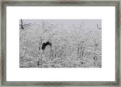 Framed Print featuring the pyrography Bald Eagle On The Creek Flying. by Timothy Latta