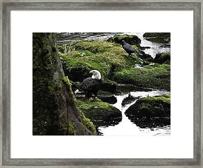Framed Print featuring the pyrography Bald Eagle On The Creek. by Timothy Latta