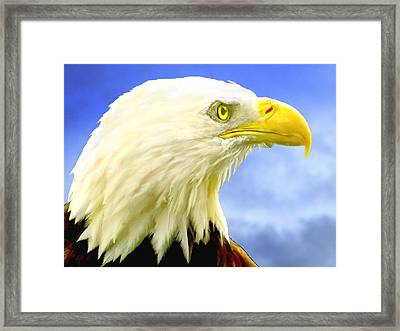 Bald Eagle Painting For Sale Framed Print