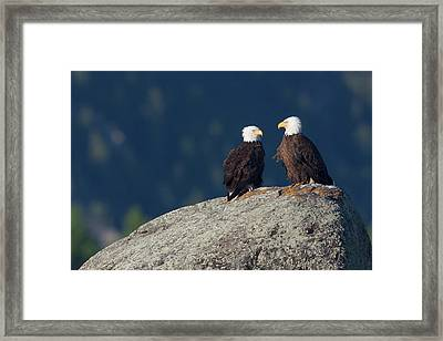Bald Eagle Pair Framed Print by Ken Archer