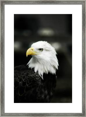 Framed Print featuring the photograph Bald Eagle by Peggy Franz