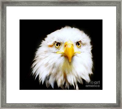 Bald Eagle Framed Print by Jacky Gerritsen