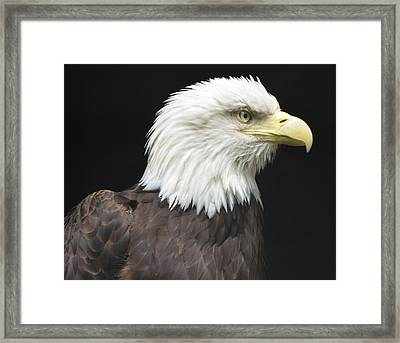 Bald Eagle Profile 2 Framed Print by Richard Bryce and Family