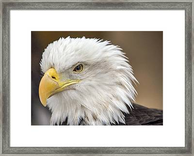 Framed Print featuring the photograph Bald Eagle by Robert  Aycock