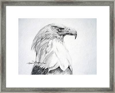 Bald Eagle Framed Print by Ron Wilson