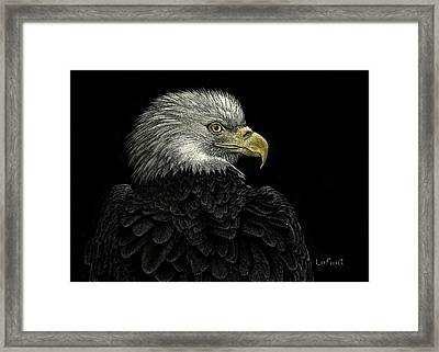 American Bald Eagle Framed Print by Sandra LaFaut