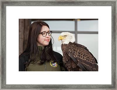 Bald Eagle With Handler Framed Print