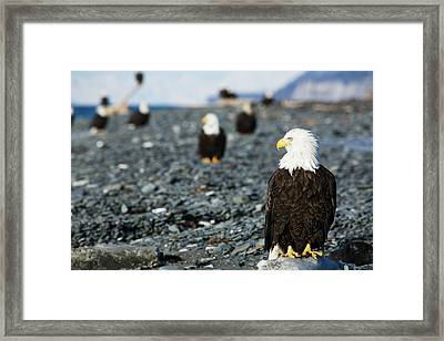 Bald Eagles Standing On The Shore Framed Print