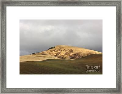 Bald Hill Above Winter Wheat Framed Print