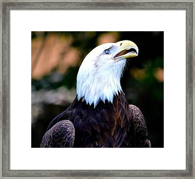 Bald Is Beautiful Framed Print