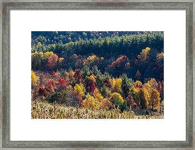 Bald Patch Colors Framed Print