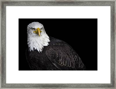 Baldy Framed Print by Chris Whittle