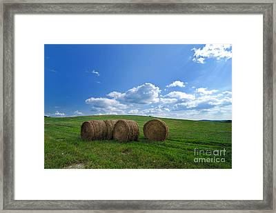 Bales Of Hay In A Field Framed Print by Amy Cicconi