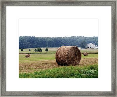 Bales In Solebury Framed Print