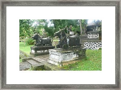 Bali Bulls Framed Print by Jack Edson Adams