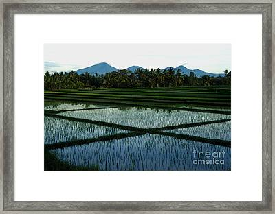 Bali Rice Paddies Framed Print by Jerry McElroy