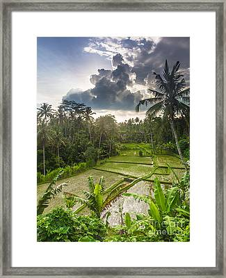 Bali Rice Terraces Framed Print by Didier Marti