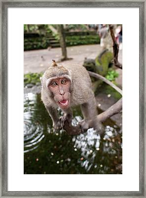 Bali Framed Print by Sergi Reboredo