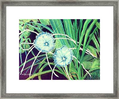 Bali White Spider Lily's  Pastel Framed Print by Antonia Citrino