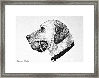 Ball Collector Framed Print by Susan Herber