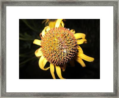 Ball Of Beauty Framed Print by Mike Podhorzer