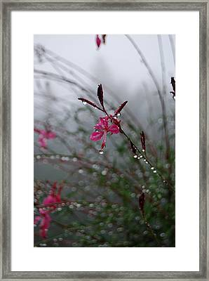 Framed Print featuring the photograph Hope - A Loss Is Not The End by Jani Freimann