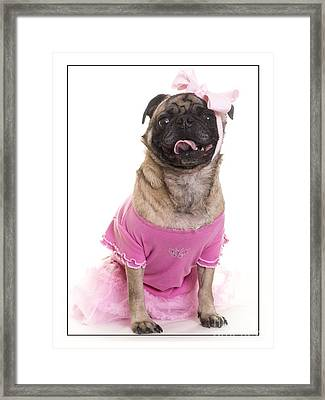 Ballerina Pug Dog Framed Print