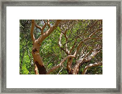 Ballet Of Medrone Framed Print by Tim Rice