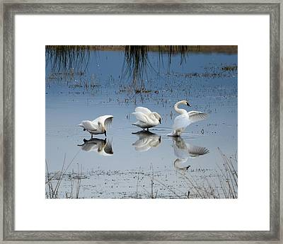 Dance Of The Trumpeters Framed Print