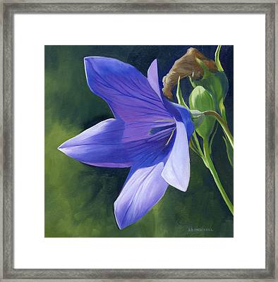 Balloon Flower Framed Print
