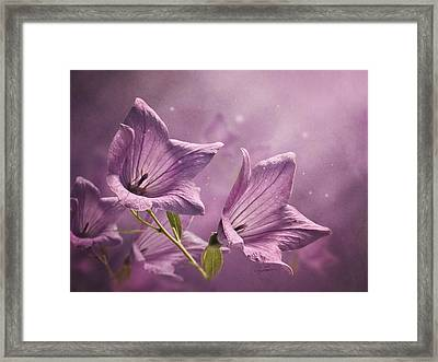 Balloon Flowers Framed Print by Ann Lauwers