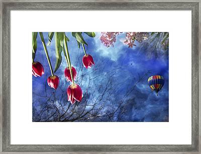 Balloonist  Framed Print by Betsy C Knapp