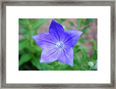Ballooon Flower Framed Print