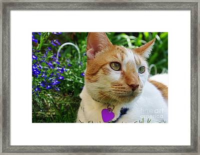Baloo Gazing Into The Distance Framed Print by Mariola Bitner